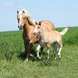 environnement de qualité pour les chevaux et les jument - lait bio copmed