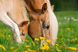 respect-des-cycles-naturels-chevaux-jument-lait-bio-copmed
