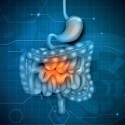 Comment FIBREGUM™ renforce la barrière intestinale au niveau cellulaire