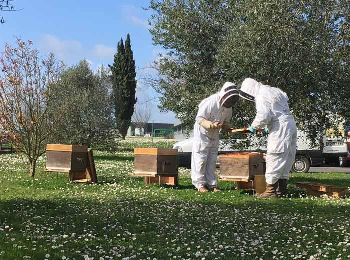 apiculteur-ouverture-ruche-copmed