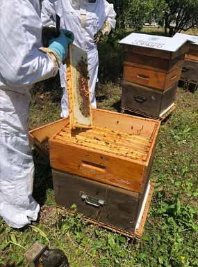 apiculteur recolte miel ruche copmed