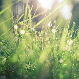 Une démarche éco-responsable, environnementale et ehique