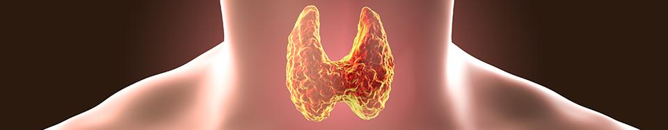 dérèglements de la thyroïde