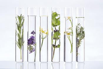 plantes médicinales en tube