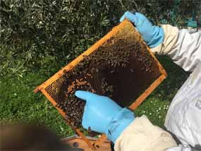 evaulation miel alveole ruche copmed