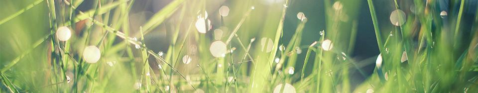 Une démarche Eco-responsable, Environnementale et Ethique
