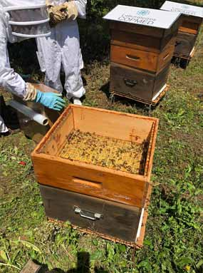 ruche et apiculteur copmed